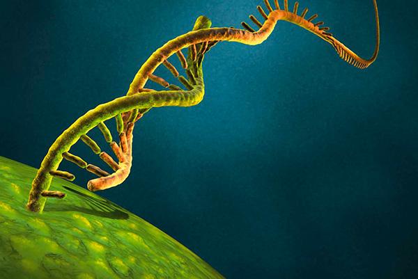 Многоцветный цитометрический анализ культуры человеческих плюрипотентных стволовых клеток