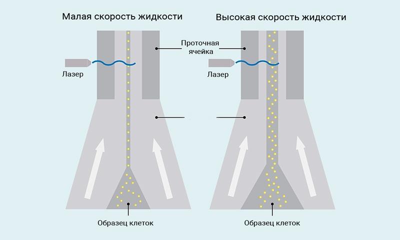 Иллюстрация гидродинамической фокусировки прибора MACSQuant